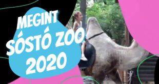 Soha meg nem unt vadaspark kirándulás-Sóstó Zoo